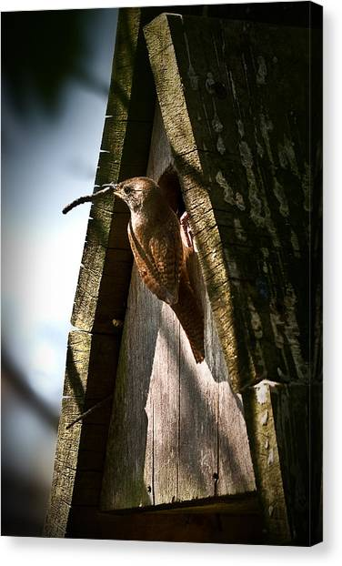 House Wren At Nest Box Canvas Print
