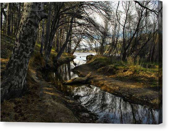 Houston Creek Canvas Print