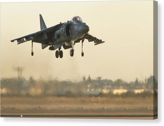 Hovering Harrier Canvas Print