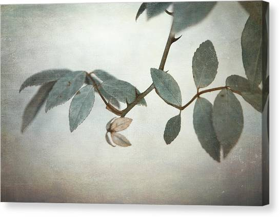 Leaf Canvas Print - How Delicate This Balance by Laurie Search