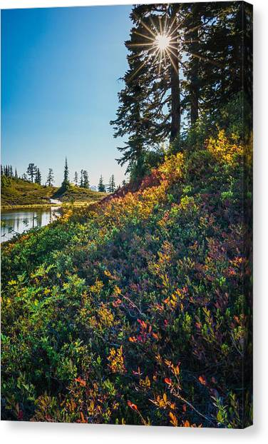 Huckleberry Afternoon Canvas Print