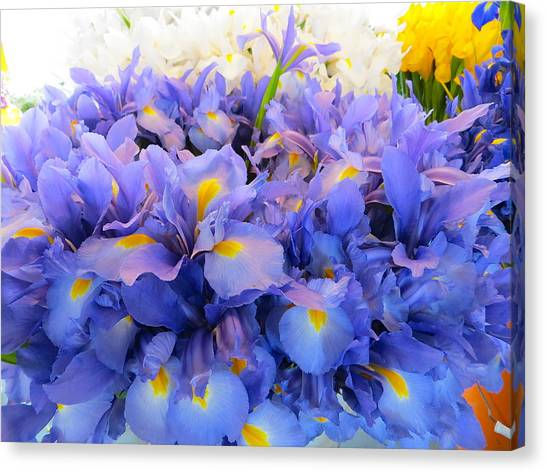 Huddling Iris Canvas Print