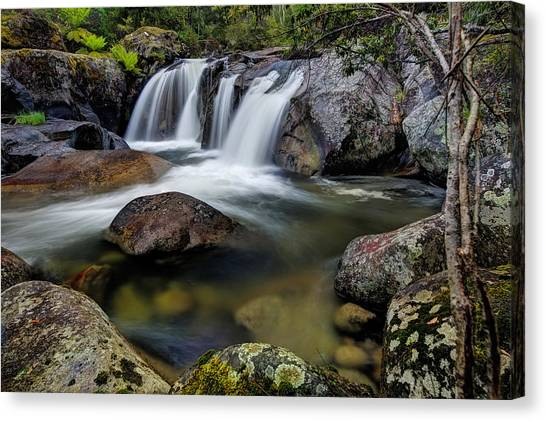 Hues Of Paradise Canvas Print