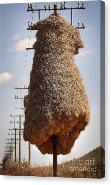 Huge Birds Nest On Pole Canvas Print