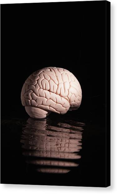 Human Brain With Reflection Canvas Print
