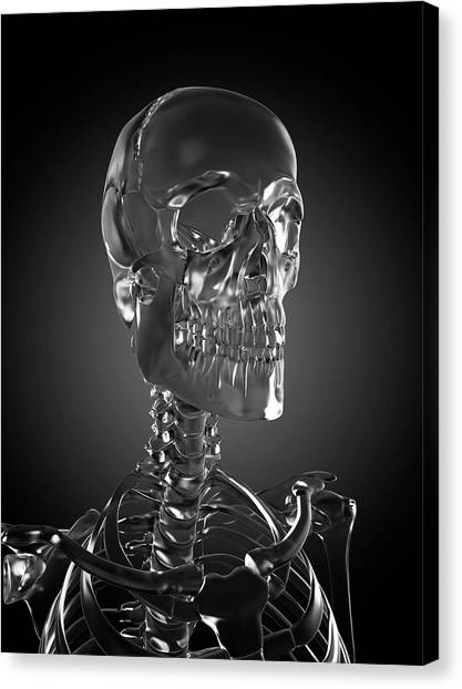 Human Skull Rendered In Glass Canvas Print by Sebastian Kaulitzki/science Photo Library