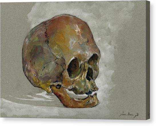 Skeletons Canvas Print - Human Skull Study by Juan  Bosco