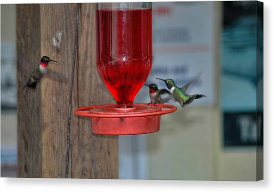 Canvas Print featuring the photograph Hummers by David Armstrong