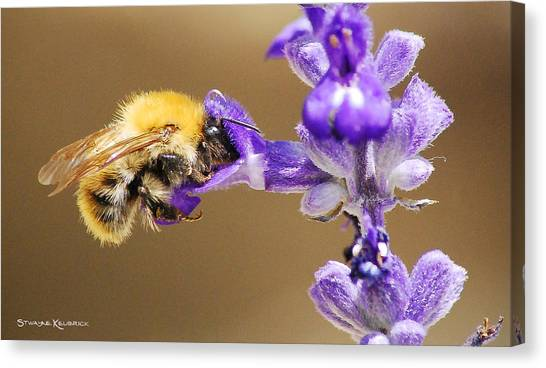 Canvas Print featuring the photograph Humming Bee  by Stwayne Keubrick
