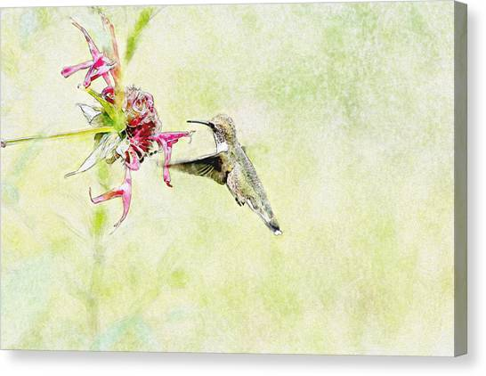 Humming Bird And Flower Canvas Print