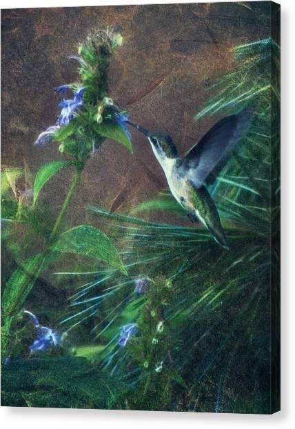 Humming Bird Canvas Print