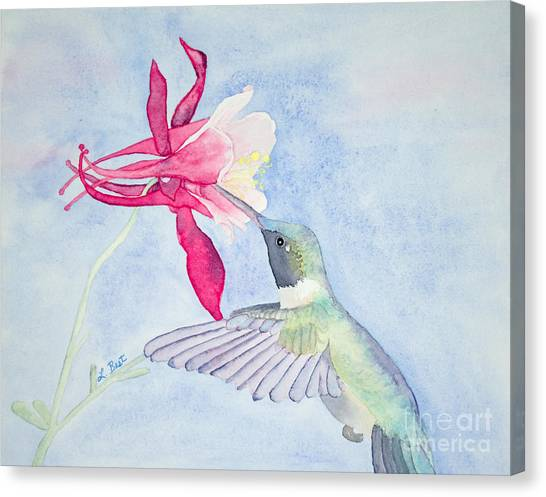 Hummingbird And Columbine Canvas Print