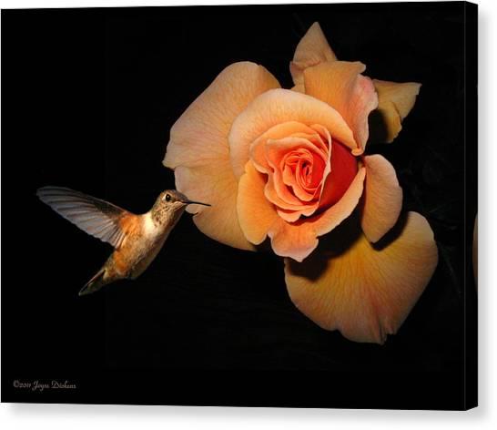 Hummingbird And Orange Rose Canvas Print