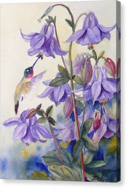 Hummingbird And Purple Columbine Canvas Print