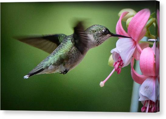 Hummingbird Carbs Canvas Print