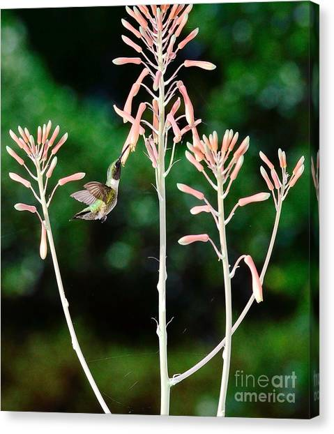 Hummingbird Emerald Green - Hummer Floats In Floral Glory Canvas Print by Wayne Nielsen