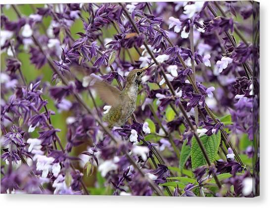 Hummingbird Flowers Canvas Print