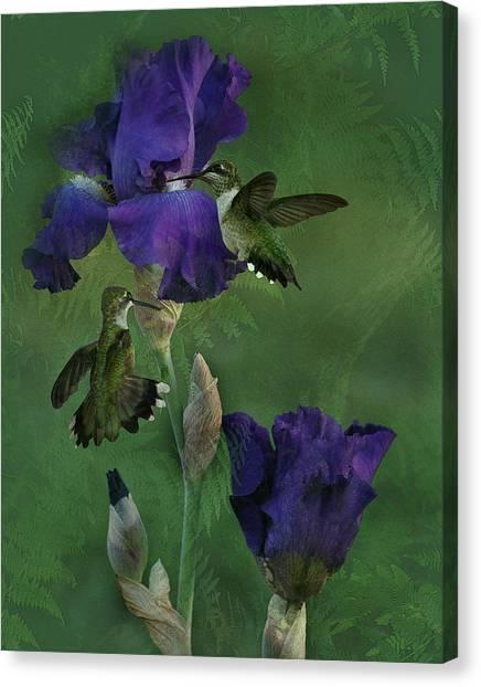 Hummingbird Gathering Canvas Print