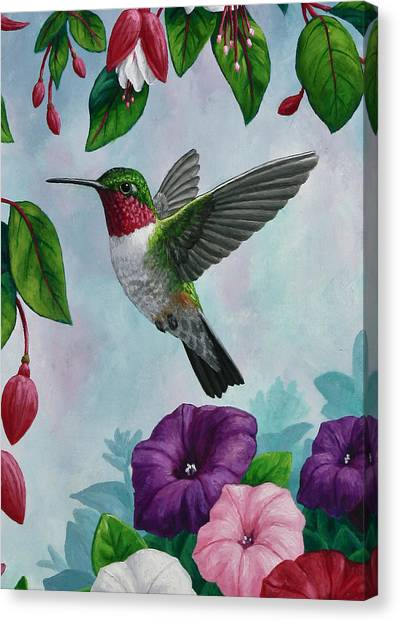 Fuschia Canvas Print - Hummingbird Greeting Card 1 by Crista Forest