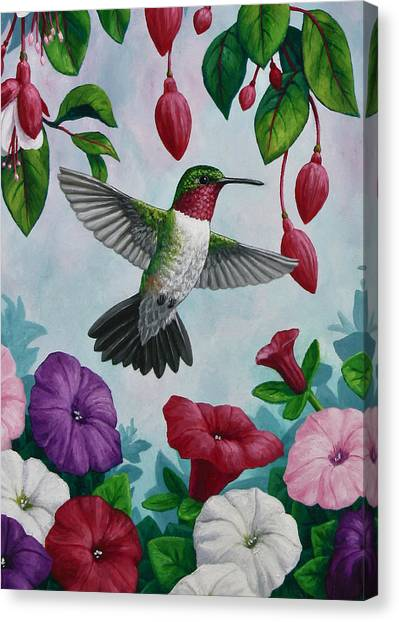 Fuschia Canvas Print - Hummingbird Greeting Card 2 by Crista Forest