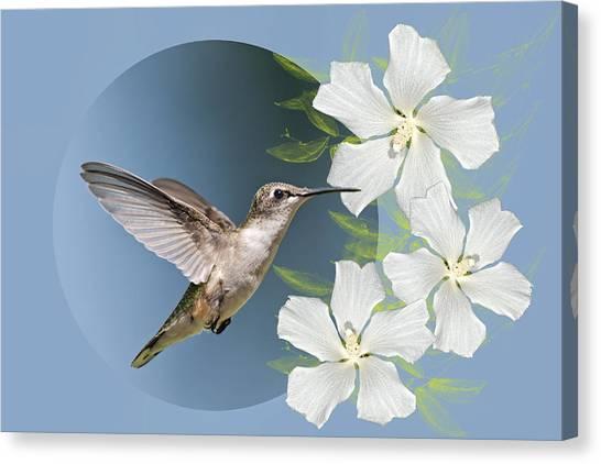 Althea Canvas Print - Hummingbird Heaven by Bonnie Barry