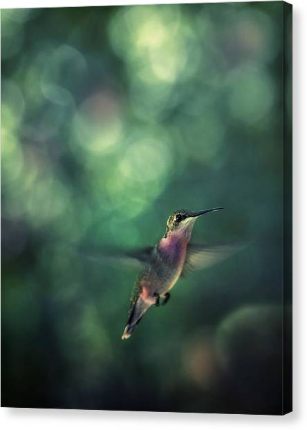 Hummingbird Hovering Canvas Print by William Schmid