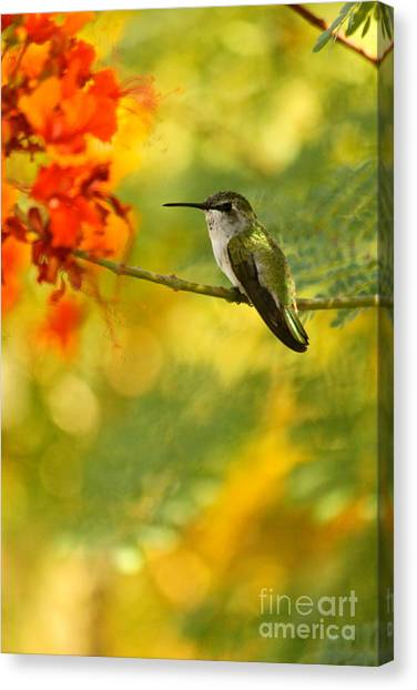 Hummingbird In A Painting Canvas Print by Michael Cinnamond