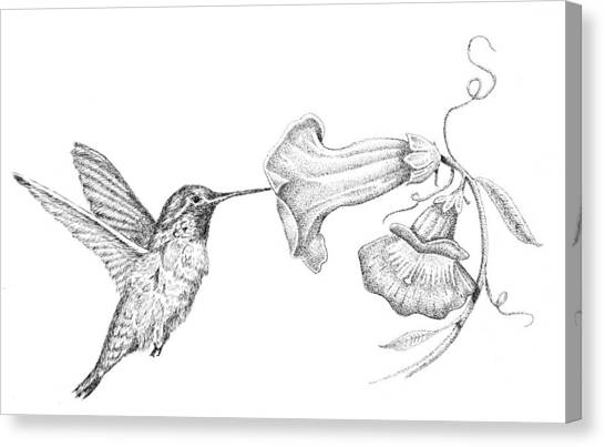 Hummingbird Canvas Print by Kyle Peron