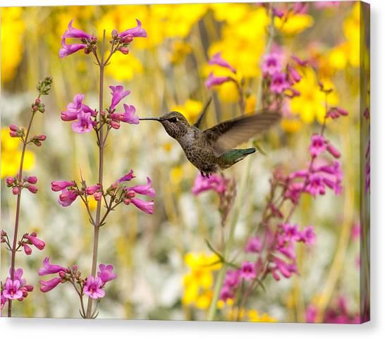 Hummingbird Paradise Canvas Print