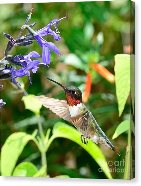 Hummingbird Canvas Print - Hummingbird Red Ruby At Purple Bloom by Wayne Nielsen