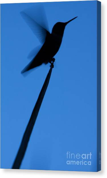 Hummingbird Silhouette Canvas Print