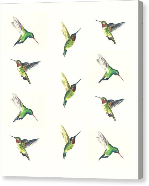 Small Birds Canvas Print - Hummingbirds Number 2 by Michael Vigliotti