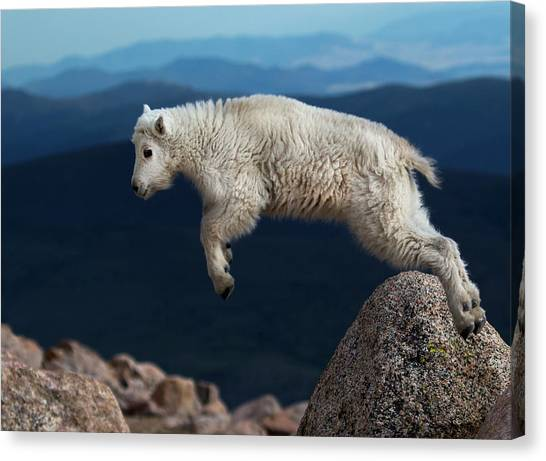 Jump Canvas Print - Hump Over by Verdon