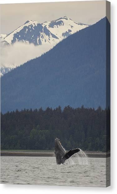 Humpback Whale In Alaska 73a6815  Canvas Print