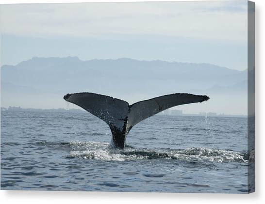 Humpback Whale Tail 3 Canvas Print