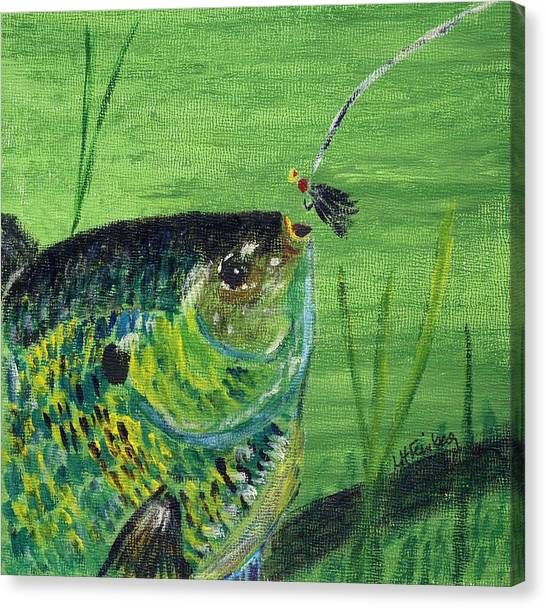 Hungry Bluegill Canvas Print