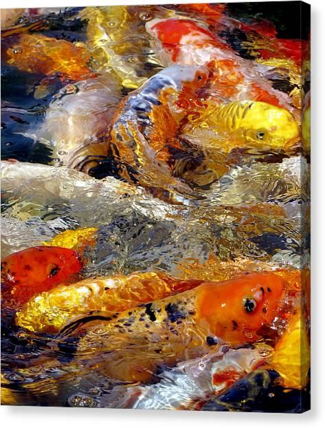 Canvas Print featuring the photograph Hungry Koi by Bob Slitzan