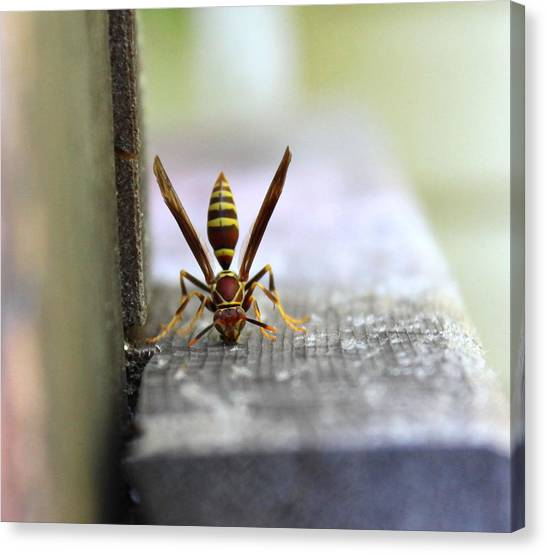 Hungry Hornet Canvas Print
