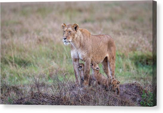 Hungry.... Canvas Print by Jeffrey C. Sink