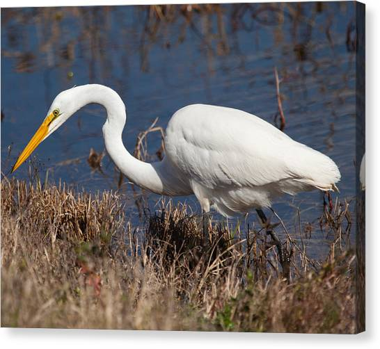 Hunting For Lunch Canvas Print