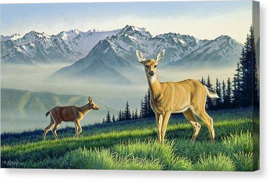 Olympic National Park Canvas Print - Hurricane Ridge-blacktails by Paul Krapf