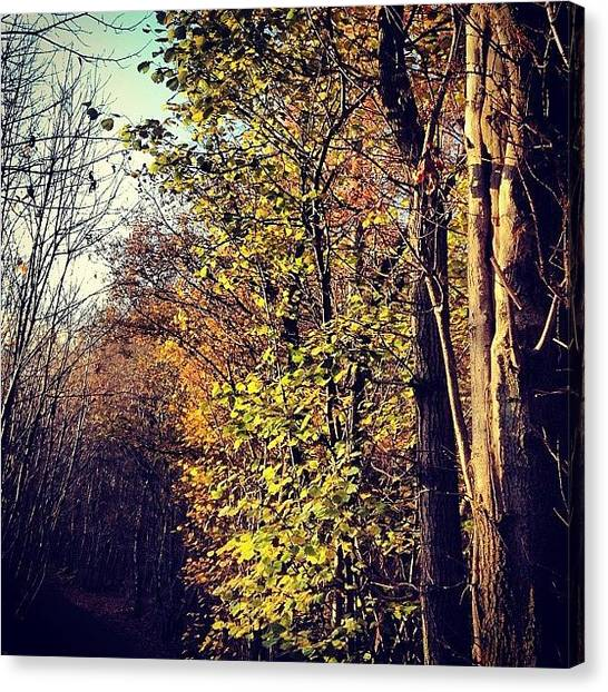 Forests Canvas Print - Hurst Woods by Nic Squirrell