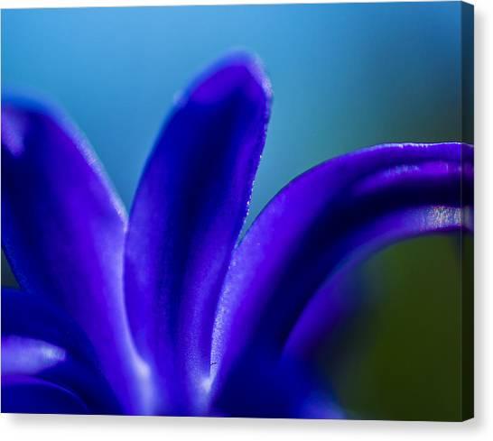 Hyacinth Detail Canvas Print