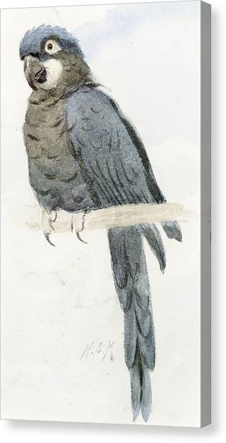 Macaws Canvas Print - Hyancinth Macaw by Henry Stacey Marks