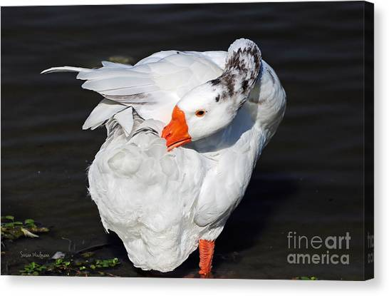Hybrid Goose Grooming After A Swim Canvas Print