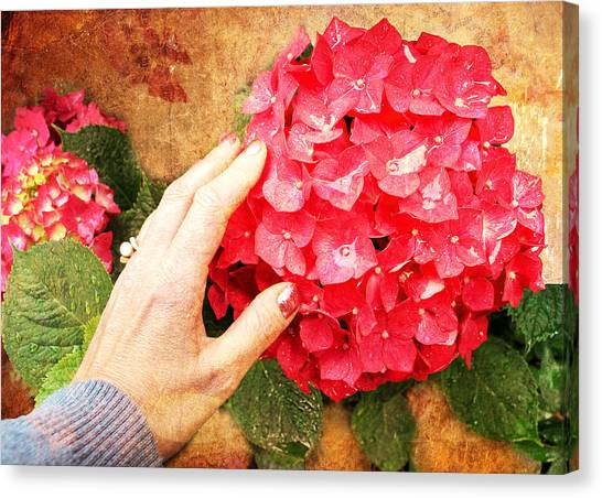 Canvas Print featuring the digital art Hydrangea by Helene U Taylor