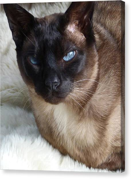 I Am A Tonkinese Canvas Print