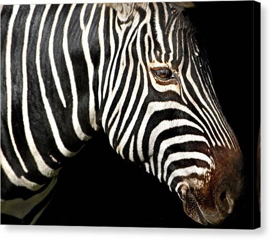 I Am A Zebra Canvas Print