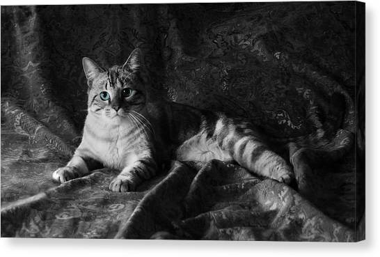 Manx Cats Canvas Print - I Am Cat by Kathleen Horner