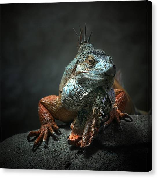 Lizards Canvas Print - I Am The King ,.. Who Else ! by Holger Droste
